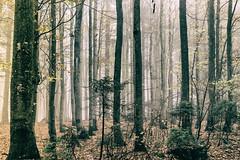 The Flow of Secrets - Explore # 77 (entry) (**capture the essential**) Tags: 2017 bavarianforest bayerischerwald bäume fog forest fotowalk landschaften natur nature nebel sonya7m2 sonya7mii sonya7mark2 sonya7ii sonyfe2470mmf4zaoss sonyilce7m2 trees wald wetter