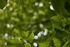 [Explore #126] rooftops (Froschkönig Photos) Tags: rooftops dach dächer bokeh grün green meyeroptikgörlitz primoplan harz nex5r wald treseburg nico santos nicosantos