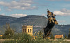 Robin (the nenuco 123) Tags: torre spain valencia azul blue 18105 d5300 nikon arasdelosolmos dog perro robin rollingstoniano