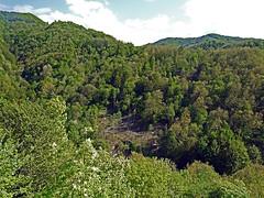 18050718738valtrebbia (coundown) Tags: gita tour statale stradastatale 45 ss45 valtrebbia trebbia natura boschi verde fiume
