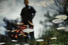 The Man In The Mirror (NVenot) Tags: abstract reflection reflections pond koi fish gold lilly pad shadow silhouette