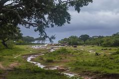 Parque nacional de Yala (Miguel Ángel Prieto) Tags: parque nacional de yala sri lanka