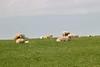 Rutland_019 (Adam.Eales91) Tags: rutland rutlandwater hambleton spring egleton