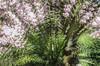 Impression printanière 03 (letexierpatrick) Tags: arbres printemps spring jardin couleur couleurs colors fleur flower flowers fleurs floraison nature nikond7000 nikon abstrait abstraction