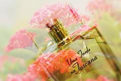 Uma tarde na Toscana...... (Martha VFS) Tags: 7dwf crazytuesdaytheme perfume