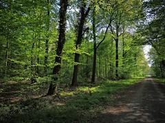 Zartes Grün im Gegenlicht. (W@llus2010) Tags: friedwald uetze april gegenlicht wald grün blätter nikon p600 weitwinkel 24mm