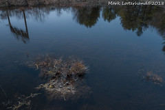Basking Eastern Painteds (Lotterhand) Tags: turtles mavic pro drone