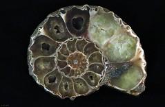 Ammonite (zeesstof) Tags: zeesstof zeissoncanon zeissplanar85mmf14t prime manual lowlight naturallighting fossil ammonite polished mineralized