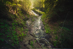 Schwangau Germany (JasyZ) Tags: germany schwangau woods wood forrest water long exposure sony zeiss 1635 f4 nature ambient light sunlight contrast