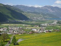 Stans (Priska B.) Tags: frühling april grün gelb blumenwiese wiese stanserhornbahn schiene stans schweiz switzerland swiss svizzera nidwalden