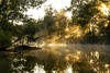 The Weir (Sterling67) Tags: 2470 7d teralba weir water reflection sunrise mist tree rays