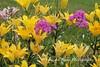 Benton Daylilly Farm (47) (Framemaker 2014) Tags: benton daylily farm garden flowers columbia county pennsylvania endless mountains united states america