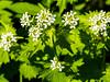 Lovely blossoms (brooklandsspeedway) Tags: creamerypark lehighvalley lowermacungie alburtis