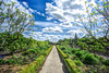 follow the green hedged road (Paul Wrights Reserved) Tags: garden vanishingpoint leadinglines green cloud clouds skyscape sky trees flowers hedge
