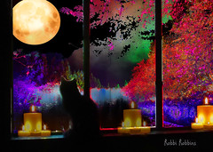 Looking Out (brillianthues) Tags: cat moon night trees candles colorful collage photography photmanuplation photoshop