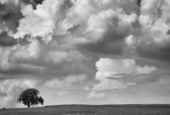 der einsame Baum (Tomsch) Tags: baum tree einsam lonely clouds wolken storm sturm regenwolken rainclouds blackandwhite schwarzweiss landscape landschaft landschaftsfotografie landscapephotography nature natur ilovenature