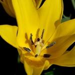 Flower bug thumbnail