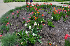 (UWW University Housing) Tags: uwwhitewater uww uwwcampus campusbeauty plants flowers colorful leaves spring 2018 trees