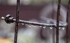 it's raining, it's pouring... (Dotsy McCurly) Tags: canoneos80d efs35mmf28macroisstm rain raining raindrops drip drop reflection yard nj newjersey bokeh