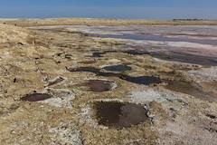 Tilapia nests at the Salton Sea (slworking2) Tags: thermal california unitedstates us tilapia nest fish round colorful saltonsea saltoncity lake