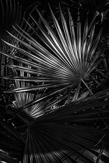 Palmetto Patterns