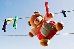 Mr. Fluffy (Helena de Riquer) Tags: kaloo peluix peluche teddy stuffedtoy joguina juguete toy jouet oursenpeluche bear ós mrfluffy cel cielo ciel sky tendedero estenedor clothesline séchoiràlinge plushtoy flickr helenaderiquer stuffed stuffedanimal fluffly teddybear cuddlytoy sony sonydsch20 carlzeiss 2010