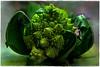 """Fractal"" Hybrid Food, a.k.a. 'Broccolo Romanesco'... (Alexxir) Tags: broccoloromanesco hybridfood romancauliflower broccoli cauliflower vegetable strangelokingvegetable green"