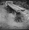 old wooden bench, grass cluster, dirt, riverbank, French Broad River Park, Asheville, North Carolina, Ricohflex DiaM, Arista.Edu 200, Ilford Ilfosol 3 developer, early April 2018 (steve aimone) Tags: bench wooden grasses dirt riverside bank frenchbroadriverpark asheville northcarolina ricoh ricohflex ricohflexdiam aristaedu200 ilfordilfosol3developer twinlensreflex tlr 120 film 120film mediumformat monochrome monochromatic blackandwhite squareformat 6x6