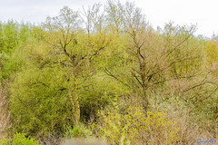 Piles Coppice 26th April 2018 (boddle (Steve Hart)) Tags: stevestevenhartcoventryunitedkingdomcanon5d4 piles coppice 26th april 2018 steve hart boddle steven bruce wyke road wyken coventry united kingdon england great britain canon 5d mk4 6d 100400mm is usm ii 2470mm standard wild wilds wildlife life nature natural bird birds flowers flower fungii fungus insect insects spiders butterfly moth butterflies moths creepy crawley winter spring summer autumn seasons sunset weather sun sky cloud clouds panoramic landscape blue bells bluebells binleywoods unitedkingdom gb