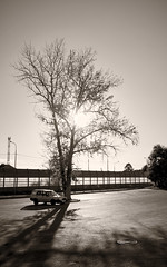 Waste ··· Отбросы (— levelost —) Tags: tree monochrome nature city shadow дерево природа солнце тень улица