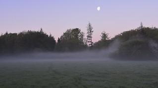 Morgennebel auf der Rinderweide; Bergenhusen, Stapelholm