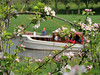 Leisure in the Betuwe (Shahrazad26) Tags: betuwe bloesem blossom gelderland nederland paysbas holland thenetherlands