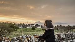 Where did that bird go?!..xx (shona.2) Tags: scotland eastlothian gullane golfcourse wall puppy pet dog rottweiler rottie nova