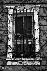 What Light Through Yonder Window Breaks (Hi-Fi Fotos) Tags: house window vines bars creepy abandoned frame glass shabby nikkor 40mm micro nikon d7200 dx hififotos hallewell mono bw blackandwhite