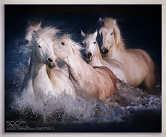 Horse Whisperer .... (KevinBJensen) Tags: equestrian horses animals horse whisperer action paul keates risu