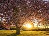 Spring Highlight (iPhone Fotograaf) Tags: spring evening sunset sun iphone8plus groningen dutch