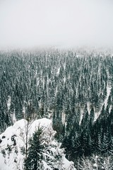"""""""just come and find me. god loves everybody, don't remind me."""" (lina zelonka) Tags: oberhof germany europe thüringen linazelonka thuringia thueringen thuringen thüringerwald thuringianforest vertical nature winter snow schnee forest wald woods trees bäume view landscape fog foggy nebel neblig nikond7100 18105mm"""