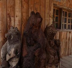 Kuterevo bear sanctuary 2018 (Secret Dalmatia Travel) Tags: bears bear animals croatia velebit hrvatska secretdalmatia