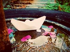 ○●No todos los que deambulamos estamos perdidos.●○ (ivethmendez86) Tags: barco flores pink rosa flowers charco reflejo macro bokeh garden nature photooftheday beautiful