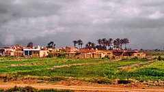 Egyptian village (gerard eder) Tags: world travel reise viajes africa egypt egipto ägypten village paisajes panorama landscape landschaft landwirtschaft agricultura agriculture villagelife outdoor niledelta natur nature naturaleza countryside