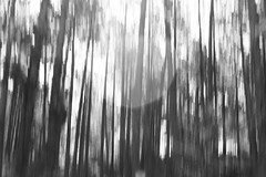 (tohlfer) Tags: icm intentionalcameramovement abstract art abstractblackandwhite blackandwhite blackandwhitesouthdakota blackhills blackandwhitelandscape canon canon5dmarkii southdakota southdakotaart southdakotablackandwhite southdakotablur centenialtrail may