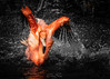 Fenicottero Americano // American Flamingo (Christian Papagni | Photography) Tags: giallo fenicottero americano american flamingo oasi sant alessio canon eos 5d mark iv ef100400mm f4556l is ii usm