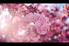 ILCE-7M2-09326-20180508-1806 // Vivitar Series 1 VMC Macro Bokina 90mm 1:2.5 (Otattemita) Tags: 90mmf25 florafauna portfolio tokinabokina vs1 vivitar vivitartokina vivitarseries1 vivitarseries1vmcmacro90mmf25 vivitarseriesone fauna flora flower nature plant wildlife vivitarseries1vmcmacrobokina90mm125 sonyilce7m2 ilce7m2 sony cnaturalbnatural 90mm