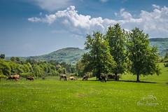 DSC_ (Anes Trebinjac) Tags: brezje bosna bosnaihercegovina bih nikon d7500 18140mm priroda