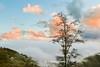 _Y2U9918.1116.Sả Sáng.Sa Pả.Sapa.Lào Cai (hoanglongphoto) Tags: asia asian vietnam northvietnam northwestvietnam landscape scenery vietnamlandscape vietnamscenery vietnamscene sapalandscape nature sunset twilight sky cloud tree mountain mountainouslandscape twilightinsapa sunsetinsapa flanksmountain canon canoneos1dx tâybắc làocai sapa phongcảnh hoànghôn chạngvạng hoànghônsapa thiênnhiên núi sườnnúi cây bầutrời mây hdr zeissdistagont3518ze