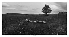 Back in black and white (nicolas.astruc12) Tags: aubrac aveyron analog blackandwhite blackwhite nikon nikond800 nature naturewatcher landscape landscapelovers sky skyporn tree arbre france photographer photography walking