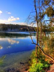 Tranquility by the lake III (elphweb) Tags: hdr highdynamicrange nsw australia tree trees forest bush woods wood lake lakeside