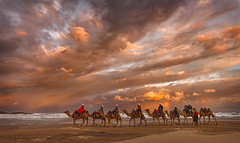 Riding into the Sunset by Ray Jennings AU - A camel ride along Birubi Beach in NSW Australia provides the foreground interest for a crazy coloured sky at sunset