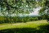 nature (friedrichfrank1966) Tags: natur naturephotography green availablelight landscape sky flickr forest scenery wald light sunlight sonnenschein meadow schatten shadow wiese 1224 sigma nikon walk clouds