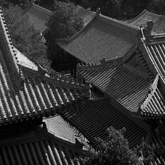 Beijing Summer Palace (ss9679) Tags: film hp5 ilford china beijing summer palace asia roof blackandwhite monochrome nosky contrast hasselblad 120 6x6 mittelformat square carlzeiss zeiss 150mm f4 cf 500cm 800 pushedfilm pushed trees tree ilfordhp5400 kodakhc110 hc110 epson4180 epson telephoto shadows detail composition filmdev:recipe=11606 film:brand=ilford film:name=ilfordhp5400 film:iso=800 developer:brand=kodak developer:name=kodakhc110
